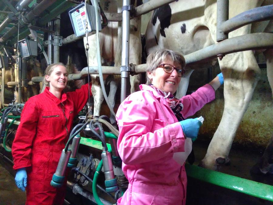 Workshop koeien melken-Boerderij Weelderen